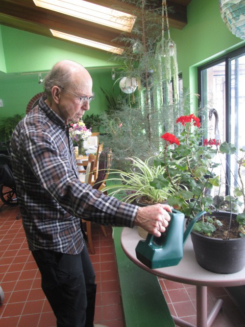 Elderly man watering potted plant