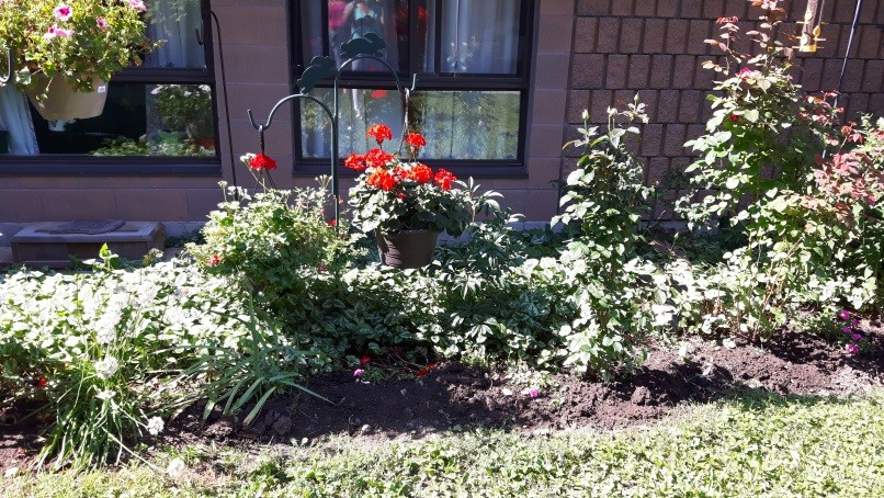 Flower beds with red flowers